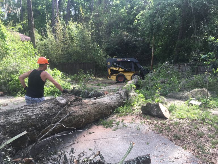 Tree Cleanup Collins Tree Service Gainesville, FL