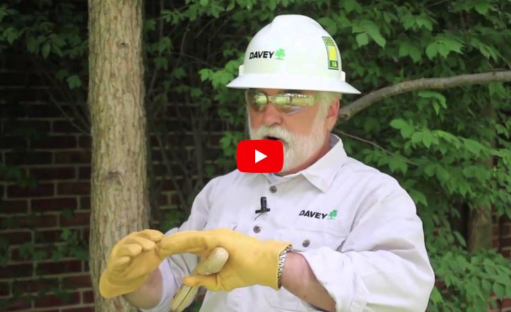 Video on Blog for Collins Tree Service Gainesville, FL