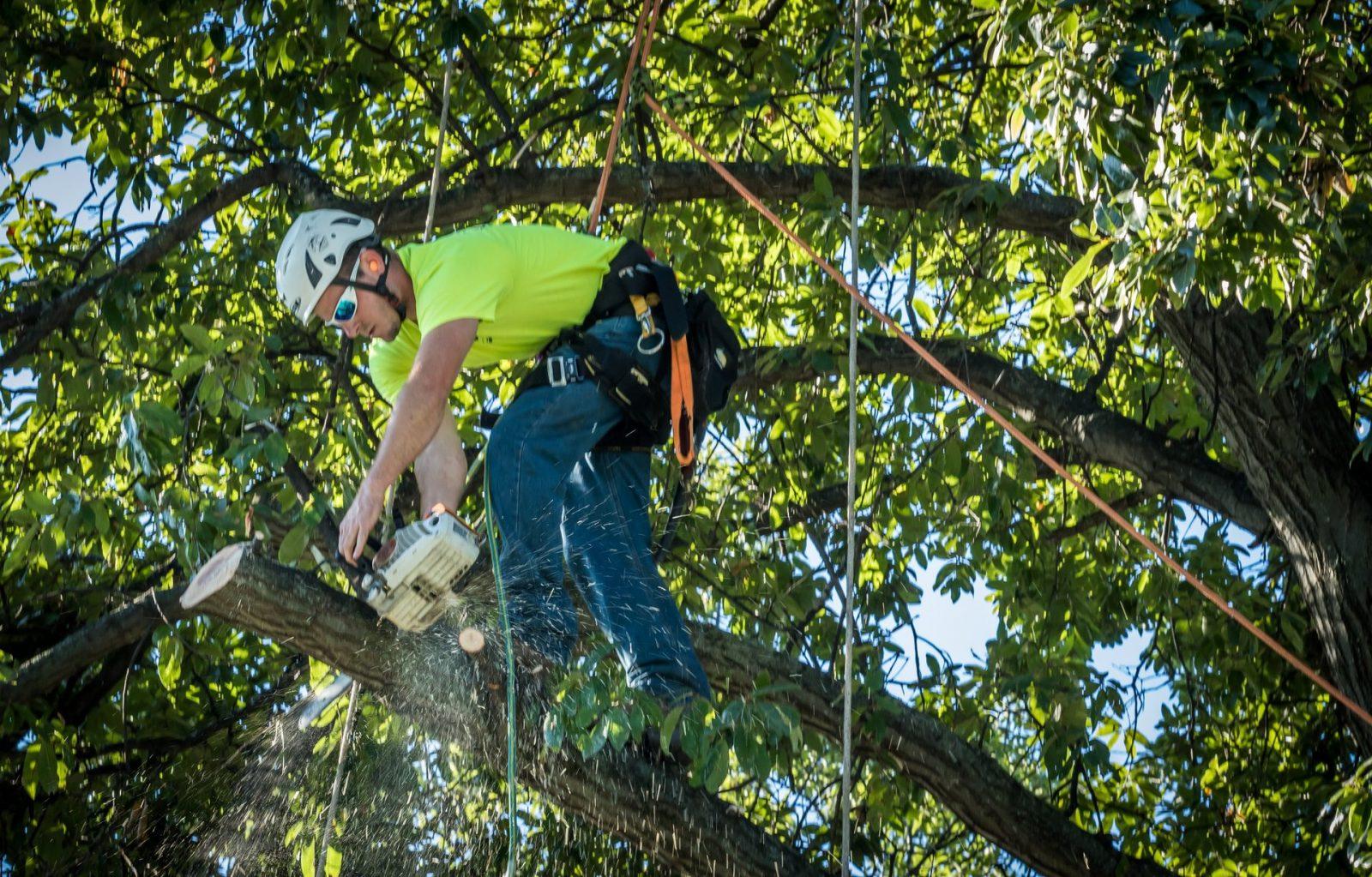 Emergency Tree Services Gainesville FL