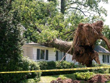 emergency tree service gainesville fl