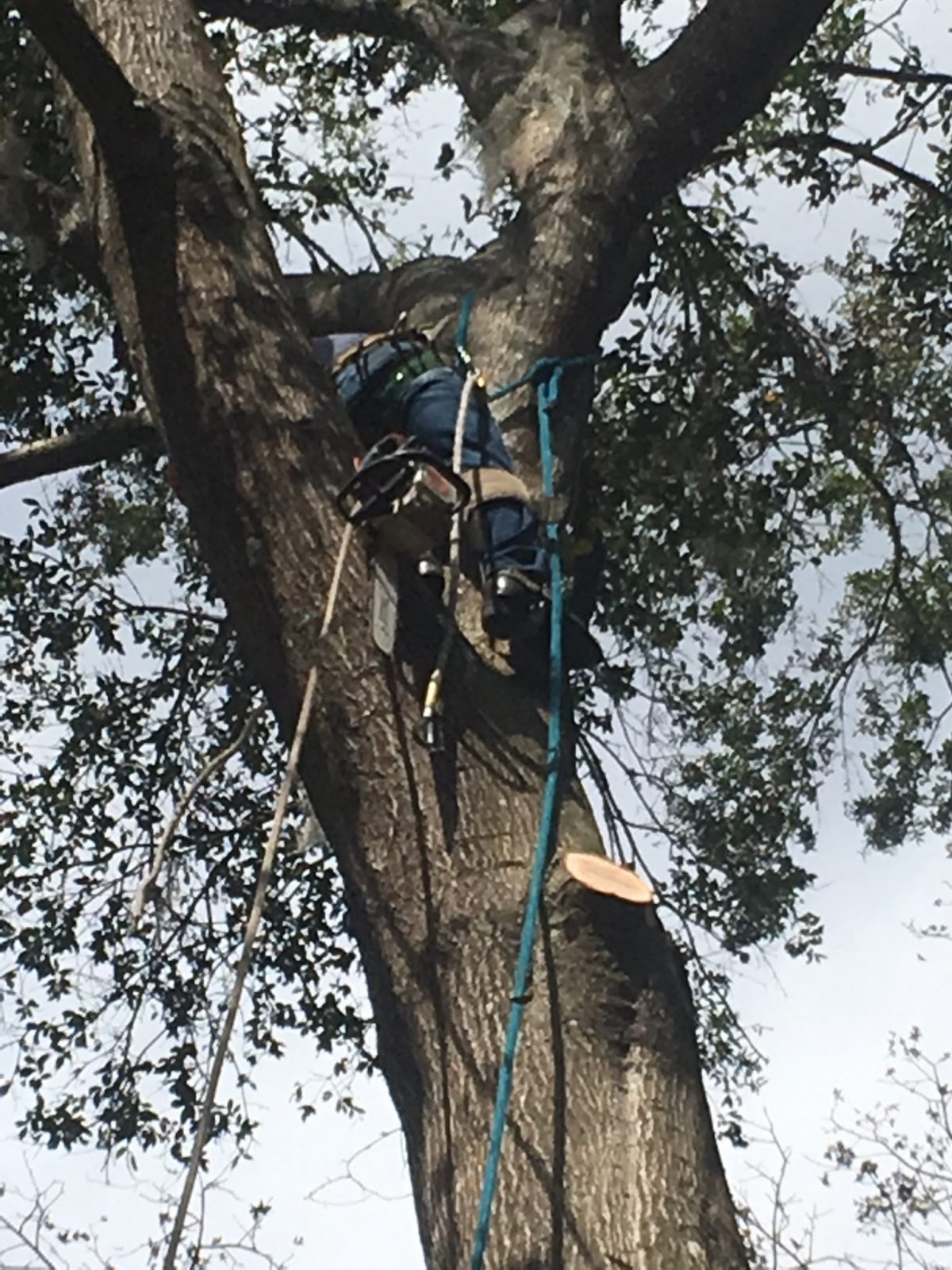 Collins Tree Service Gainesville, FL