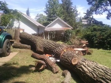 tree cleanup gainesville fl