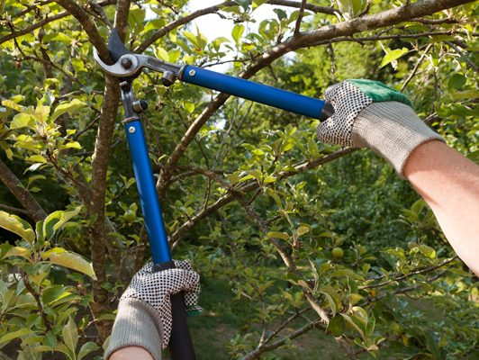 tree pruning gainesville fl