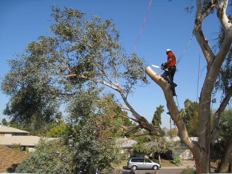 Tree Cutting in Gainesville FL