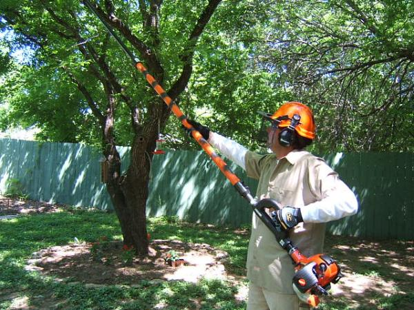 Tree Pruning in Gainesville FL