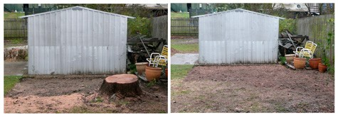 stump grinding gainesville fl