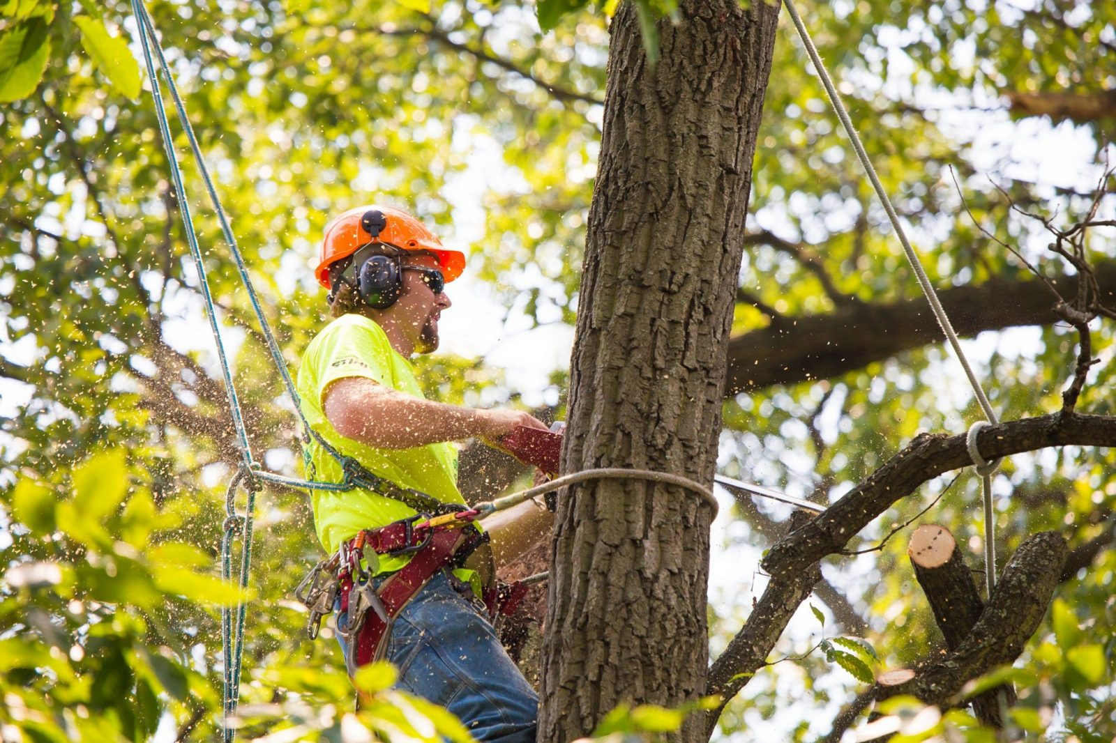 Tree Removal Gainesivlle FL
