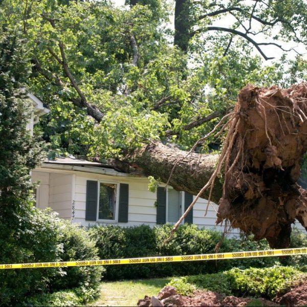 Tree Services in Gainesville FL