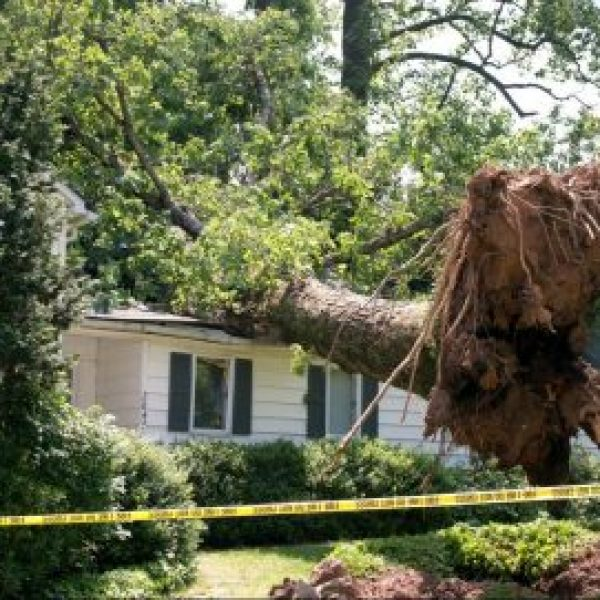 emergency tree service gainesville fl