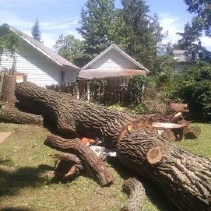tree cleanup gainesville fl