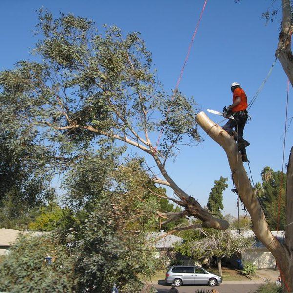 Tree Cutting in Gainesville FL