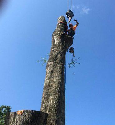 Tree Services Gainesville FL