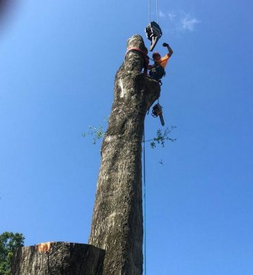 Tree Services Gainesville FL